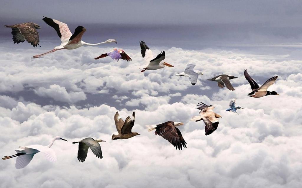 Resultado de imagen para Migración de aves