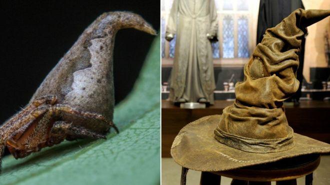 La nueva araña que se parece al Sombrero de Harry Potter  b19ebc5250c