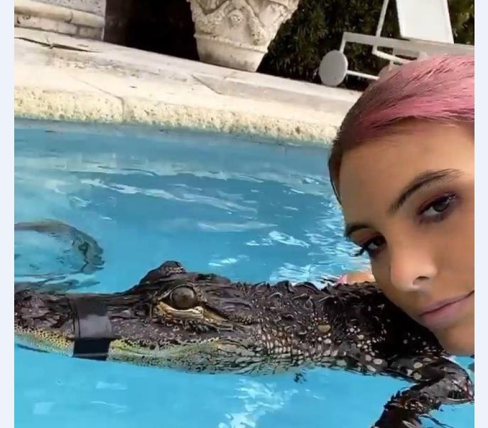 Acusan a Lele Pons de maltratar a un lagarto   Ecuavisa