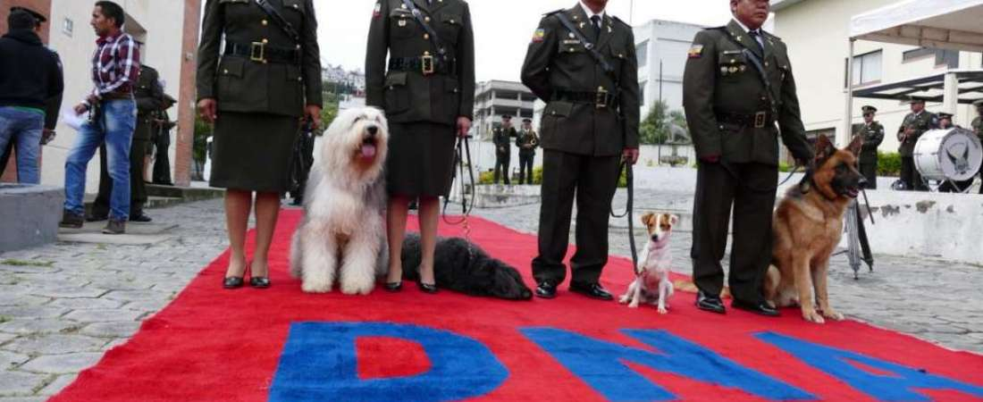 Canes son despedidos con honores. Foto: Policía