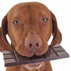 """Si hay un alimento que es como la """"criptonita"""" para los perros, es el chocolate."""