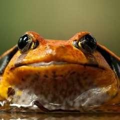 Asociación de Caza del Sur de Texas dice que el anfibio es real. Foto referencial / pixabay.com