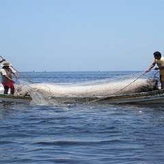 El sector pesquero ha identificado los puntos donde se registran más ataques de piratas. Foto Ilustrativa/El Pitazo.