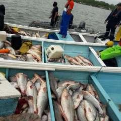 Autoridades investigan presunto robo de pesca en Puerto Bolívar. Foto: Ecuavisa