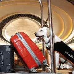 Una de las nuevas atracciones que tiene el hotel Park Hyatt Melbourne situado en la ciudad Australiana. Foto: Morelia.com