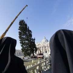 El árbol de 21 metros (69 pies) de alto fue levantado el jueves con una grúa. Foto: AP