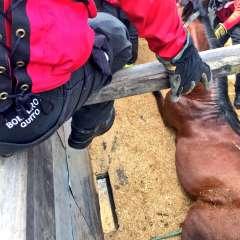 El animal permanece en condiciones estables tras el susto. Foto: CBQ