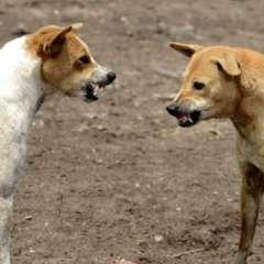 Los habitantes locales ven con desconfianza a los perros callejeros. Foto: AFP