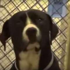 Benny estuvo 6 meses esperando que alguien lo adopte. Foto: Captura