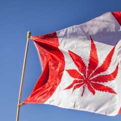 Canadá legaliza la marihuana recreativa Foto: AFP