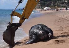 La criatura marítima ha dejado perplejos a los biólogos locales. Foto: lavanguardia.com