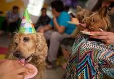 Día mundial del perro ¡Celebra a tu mascota!