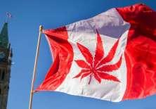 La marihuana alcanzó niveles de demanda récord en Canadá.