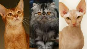 Fotos: El mundo del gato