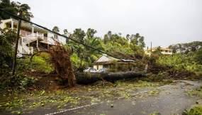 Un árbol arrancado del suelo ha caído sobre una pequeña casa en la aldea de Viard-Petit Bourg cerca de Pointe-à-Pitre el 19 de septiembre de 2017 en el territorio francés de Guadalupe tras el paso del huracán María.