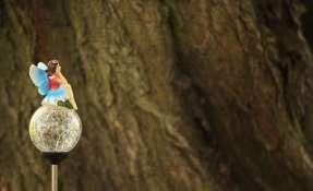 El árbol evolutivo de las hadas no pudo comprobarse...