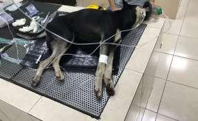 La Fundación Rescate Animal Ecuador rechazó el suceso. Foto: Cortesía