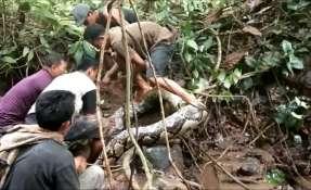 La pitón es una de las serpientes más largas del mundo. Foto: AFP