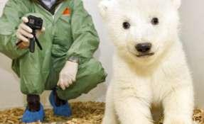 Una osita polar en el zoológico de Berlín, Alemania, el jueves 14 de febrero del 2019.