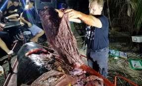 Una ballena con 40 kg de plástico en su estómago muere de hambre. Foto: AFP