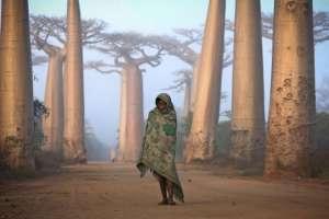 Niña camina entre los baobabs