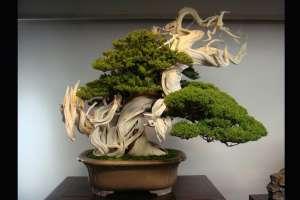 Este Bonsai tiene más de 800 años. ¿Se imaginan cuántos dueños ha tenido?