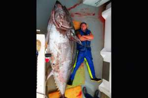 El atún que pescó este hombre pesó 415kg, peces como este se pueden comer a un hombre entero tranquilamente