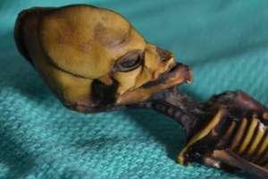 Se llegó a especular que el esqueleto momificado de esta niña era un extraterrestre. Foto: Emery Smith.