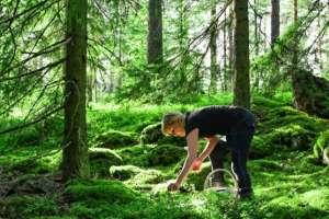 Las bayas o frutas del bosque son un ingrediente habitual de la dieta nórdica.