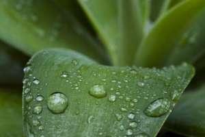 Detectar el aroma a lluvia ha sido objetivo de científicos y perfumistas.
