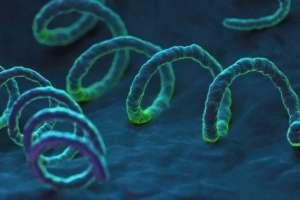 La sífilis aumentó 70% en Estados Unidos