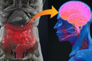 Las personas a las que le extirparon el apéndice son menos propensas al Parkinson.