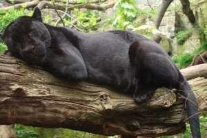 El zoo confirmó que el animal no sería sacrificado (foto de archivo).