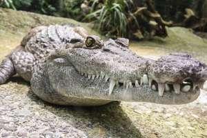 El animal llenó de terror a una pequeña comunidad de Australia. Foto referencial / pixabay.com