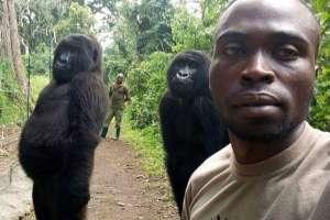 Los gorilas que posan para una selfie enloquecen las redes.