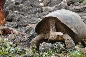 Los animales no están a salvo de la cacería humana: en el cielo las aves, en la tierra las tortugas y en el mar las focas.
