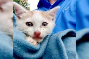 El segundo gatito se salvó, pero corrió hacia el bosque y no lo han encontrado. Foto: Toms River Police Department