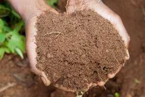 Personas en todo el mundo comen tierra, una práctica que es milenaria. Pero ¿por qué lo hacen?