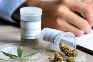 ECUADOR.- El uso terapéutico del cannabis es uno de los temas de mayor discusión entre legisladores. Foto: Archivo