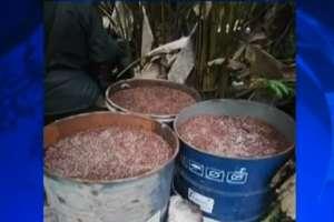 El decomiso se realizó en una población cercana a San Lorenzo, Esmeraldas. Foto: Captura de video.