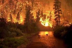 Esta foto fue tomada en el 2000 durante un incendio en Montana, Estados Unidos.