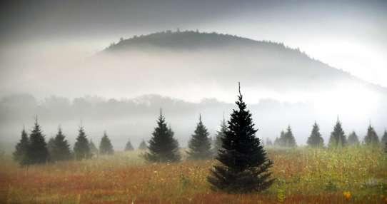 Una granja de árboles de Navidad, en Maine, el 27 de septiembre de 2017. Foto: AP