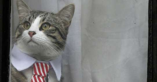 El gato de Assange ha salido con corbata a la ventana de la Embajada de Ecuador en Londres. Foto: AFP