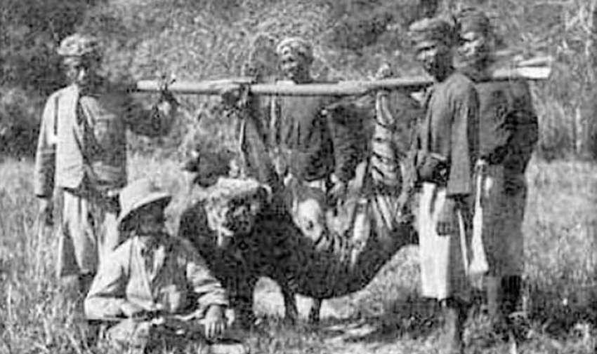 La fotografía, tomada en 1913 definitivamente no está nítida, pero de todas formas documenta una de las tres subespecies de tigre en Indonesia y la subespecie de tigre más pequeña de la historia.  El último tigre de Bali confirmado fue cazado en septiembre de 1937. Se sospecha que pequeños grupos sobrevivieron hasta la década de 1940 o 1950. Foto: upsocl