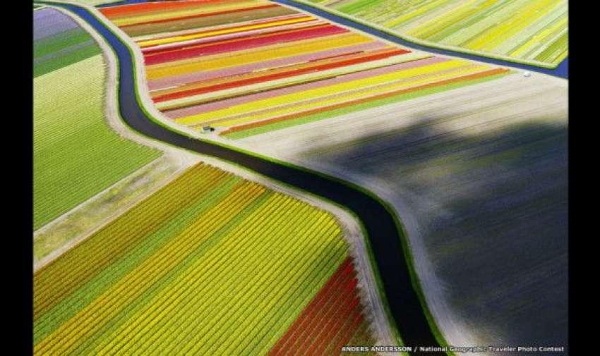 """Anders Andersson utilizó un dron para captar esta imagen de un campo de tulipanes cerca de Vorrhout, Holanda, dando la perspectiva de """"ojo de pájaro"""". BBC"""