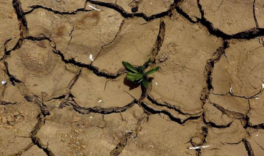 Una planta crece entre la tierra seca, durante una ola de calor en la localidad de Gauribidanur, en el distrito de Doddaballapur, India. EFE