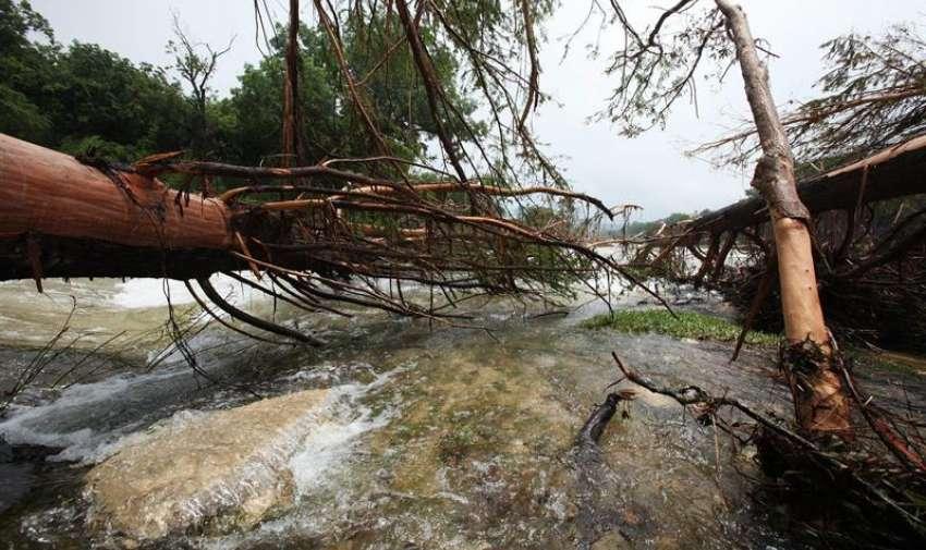Vista de varios árboles destruidos en la desembocadura de Cypress Creek y río Blanco, en Wimberly, Texas (EE.UU.) EFE