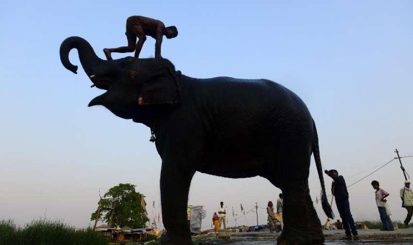 Un mahout india lava su elefante en una carretera en Allahabad , el 9 de junio de 2015. AFP