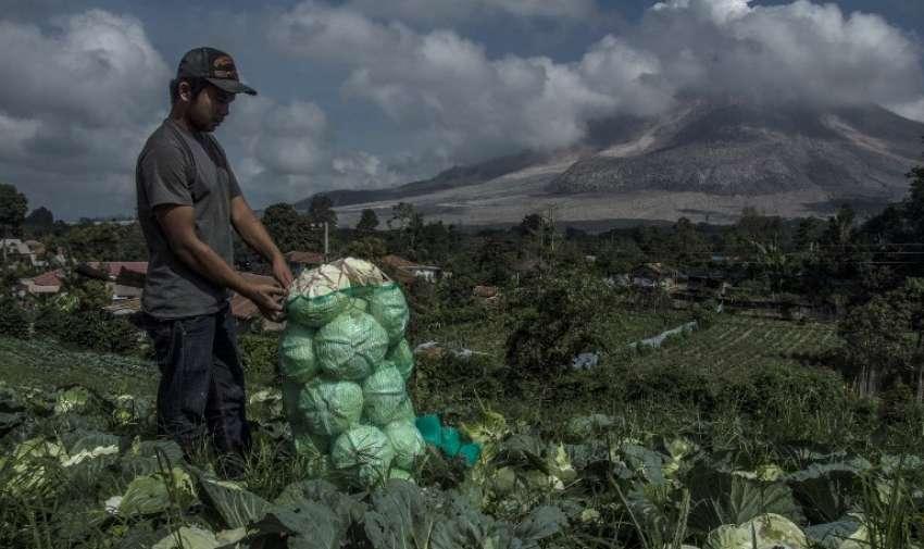 Un agricultor indonesio funciona como el monte Sinabung (R ) arroja cenizas volcánicas en el distrito de Karo en la provincia de Sumatra del Norte el 11 de junio de 2015. AFP