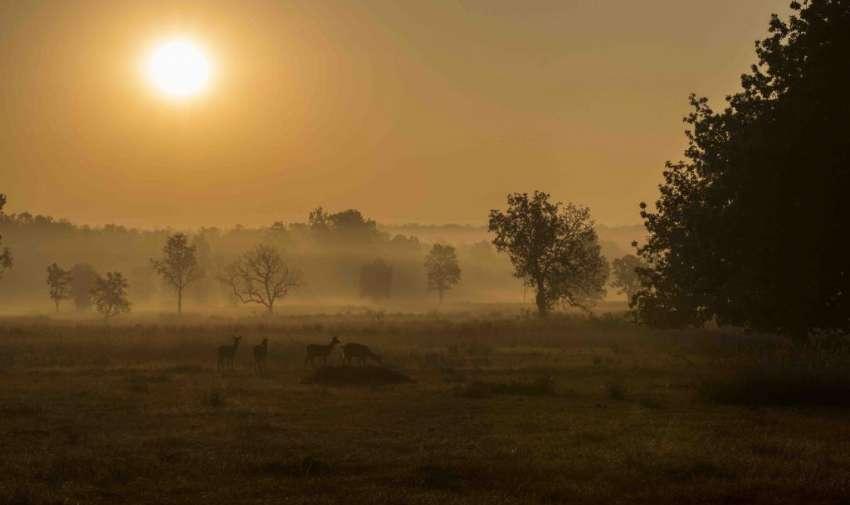 Madhya Pradesh / India
